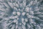 Tuhá zima pomáhá lesníkům v boji s kůrovcem