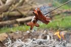 Špekáčky na ohni