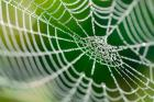 Co všechno dokáží pavouci?