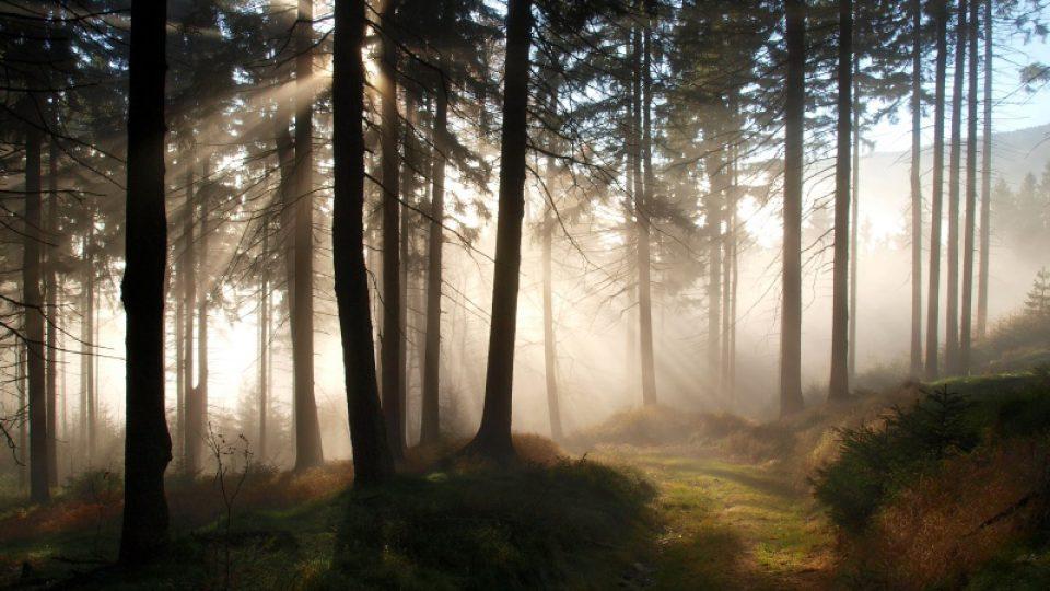 """Vítěz bleskové fotosoutěže Odpoledne s Dvojkou: kategorie """"Příroda"""""""