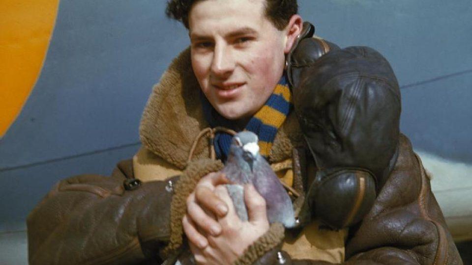 Pilot RAF drží poštovního holuba, rok 1942