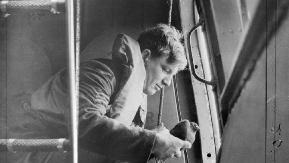 Seržant RAF se chystá vypustit poštovního holuba z boku hydroplánu Saro Lerwick