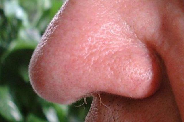Lidský nos