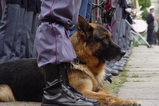 Policejní pes, ilustrační obrázek