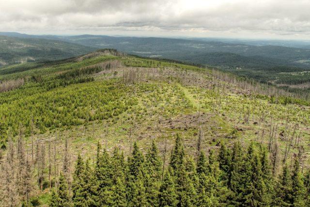 šumavské lesy | foto: Jan Rosenauer