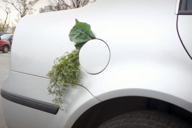 Biopaliva mají budoucnost