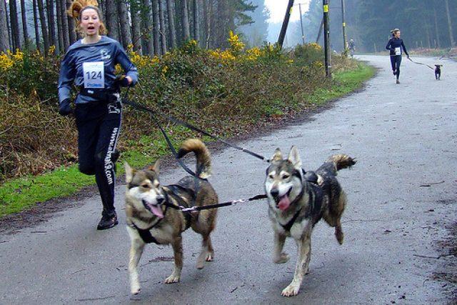 Racheal Baileyová z Akna K9 Academy se dvěma ze svým psů
