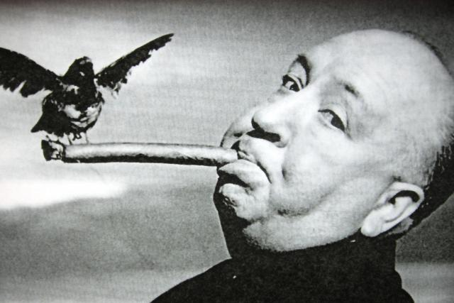 I Alfred Hitchcock měl s ptáky problém | foto: zdroj: Flickr.com,   Hoshi_sae,   CC BY 2.0