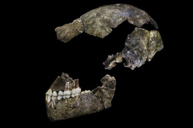 Sestavená lebka člověka Homo naledi