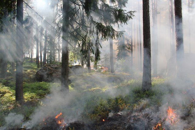 Řízený požár