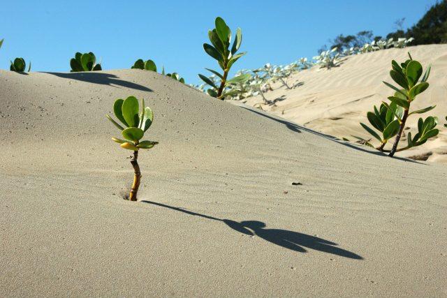 Jak se rostliny chovají? Podle čeho se rozhodují? I to dnes zkoumají botanici | foto: Fotobanka Pixabay
