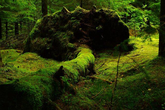 Storch připouští,  že lesů opravdu přibývá,  asi i nejvíc v historii,  ale problém je v jeho monokulturách | foto: CC0 Public domain,  Fotobanka Pixabay