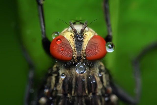 Zvířata vnímají magnetické pole Země pomoci proteinu v oku | foto: Fotobanka Pixabay