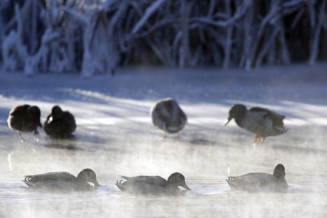 Na důsledky mrazu umře řada menších ptáků. S nimi ale i plno škůdců  (např. hraboši) | foto: ČTK