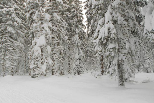 Šumava, les, sníh, zima