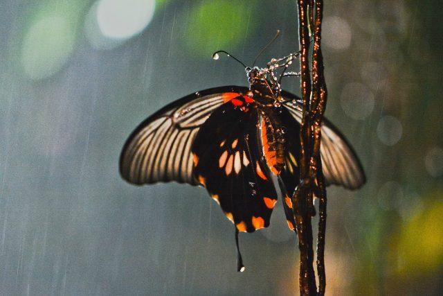 Může mávnutí křídel motýla nad Afrikou způsobit hurikán nad Amerikou?