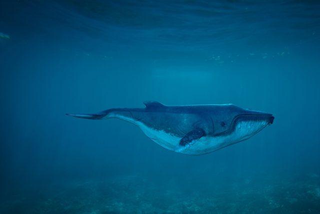 Velryba - přeborník v pojídání velkých soust