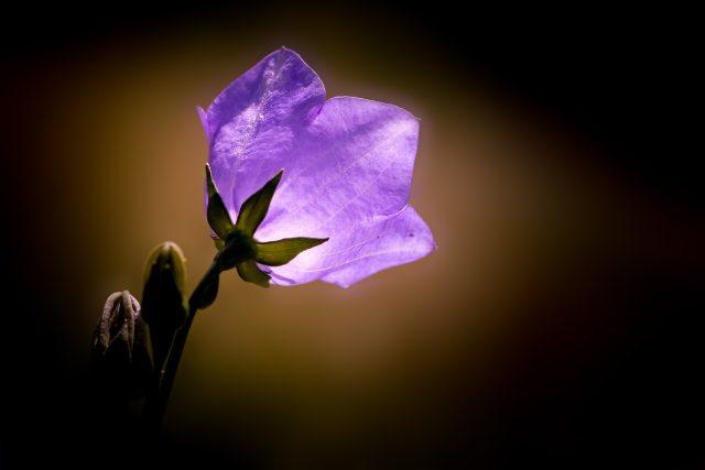 Svítící květina