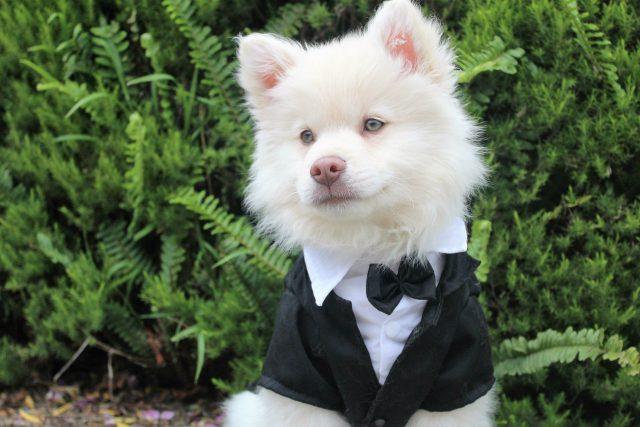 Chytrý pes? Na co asi myslí?   foto: Fotobanka Pixabay