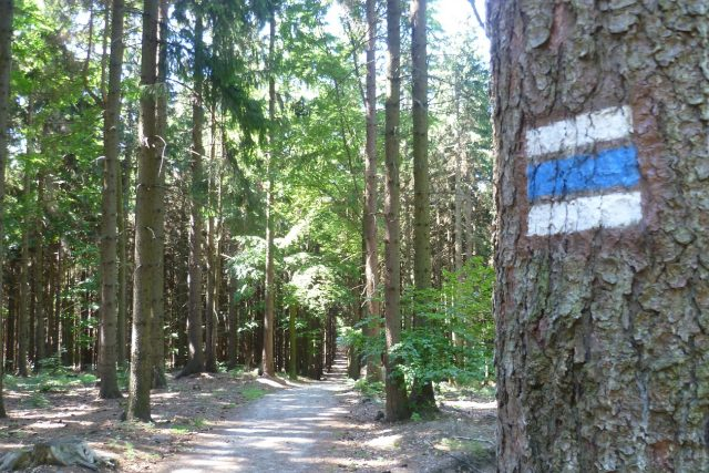 Přístup k Mařence po modré turistické trase