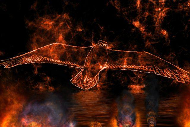 Někteří ptáci schválně rozšiřují požáry