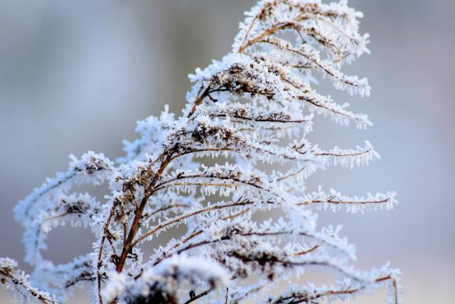 Zima | foto:  Alicja,  Pixabay,  CC0 1.0