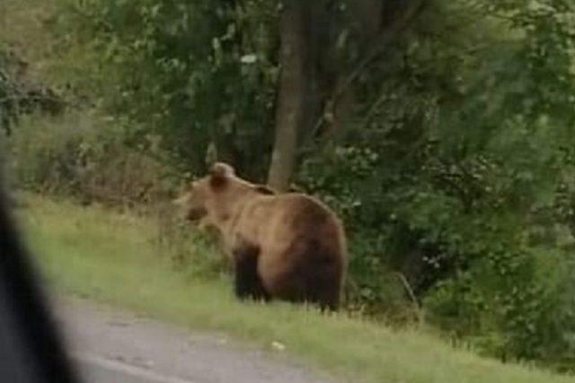 Medvěd u Doubrav