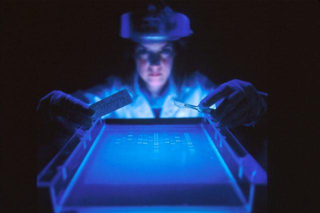 Genetika | foto: National Cancer Institute,  Fotobanka Unsplash