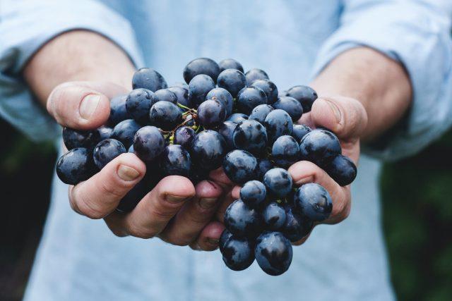 Hroznové víno | foto: Fotobanka Unsplash