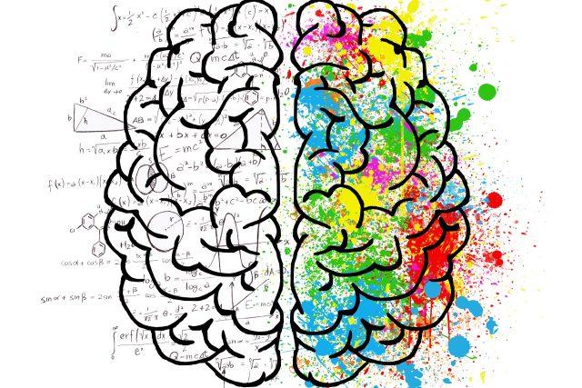 Jak vnímá mozek?