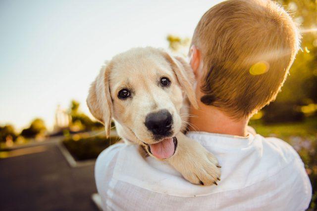 člověk a pes | foto: Fotobanka Pixabay  (5008272)