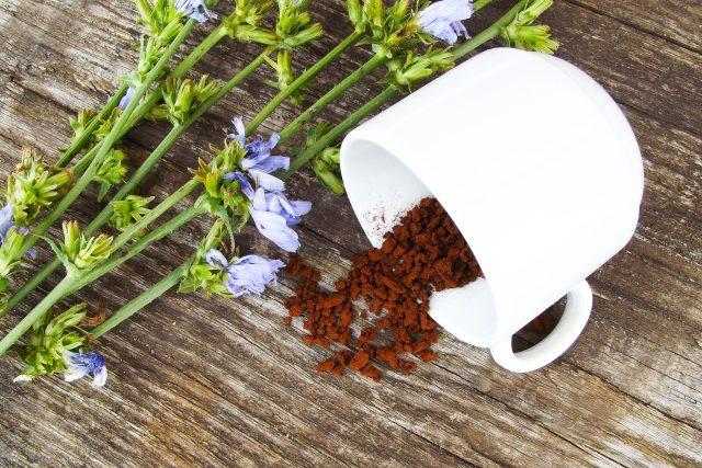 Kávovina z čekanky, cikorka