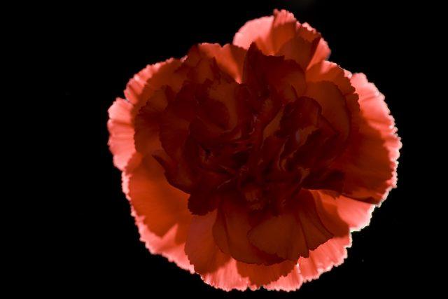 Případ vraždy školačky z Otína symbolizuje červený karafiát