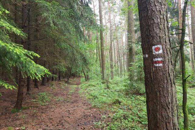 Turistická značka,  naučná stezka,  příroda,  les,  cesta,  výlet,  dovolená | foto: Andrea Poláková,  Český rozhlas,  Český rozhlas