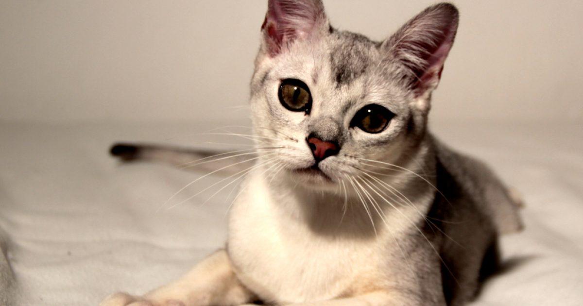 Kočička palce